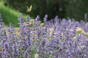 連絡が来る、復縁、復活愛の蝶の待ち受け画像