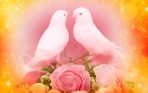 白い小鳥、両思いになれるまちうけ