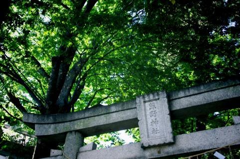 梛(なぎ)の木の葉で恋愛運アップ、カップルなら愛情が深まるおまじない