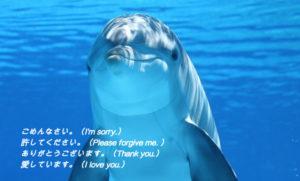 潜在意識のクリーニング イルカ待ち受け、ホーム画像