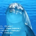 潜在意識のクリーニング イルカ