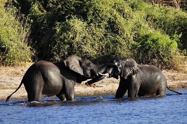 elephant-73136_640
