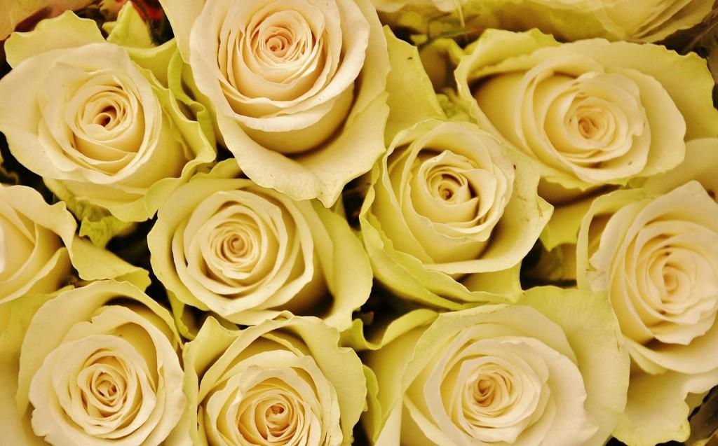 flower-366159_1920
