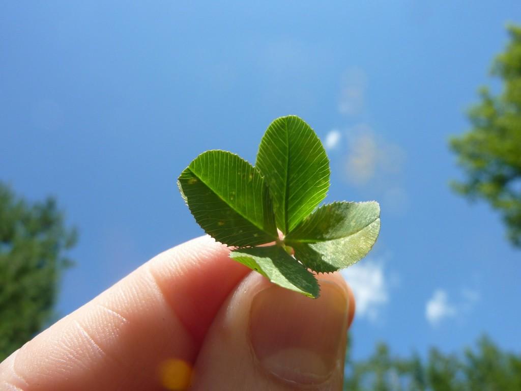four-leaf-clover-19776_1280