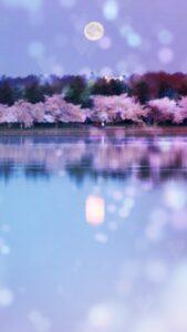 桜の花と満月の運気が上がるおまじない待ち受け