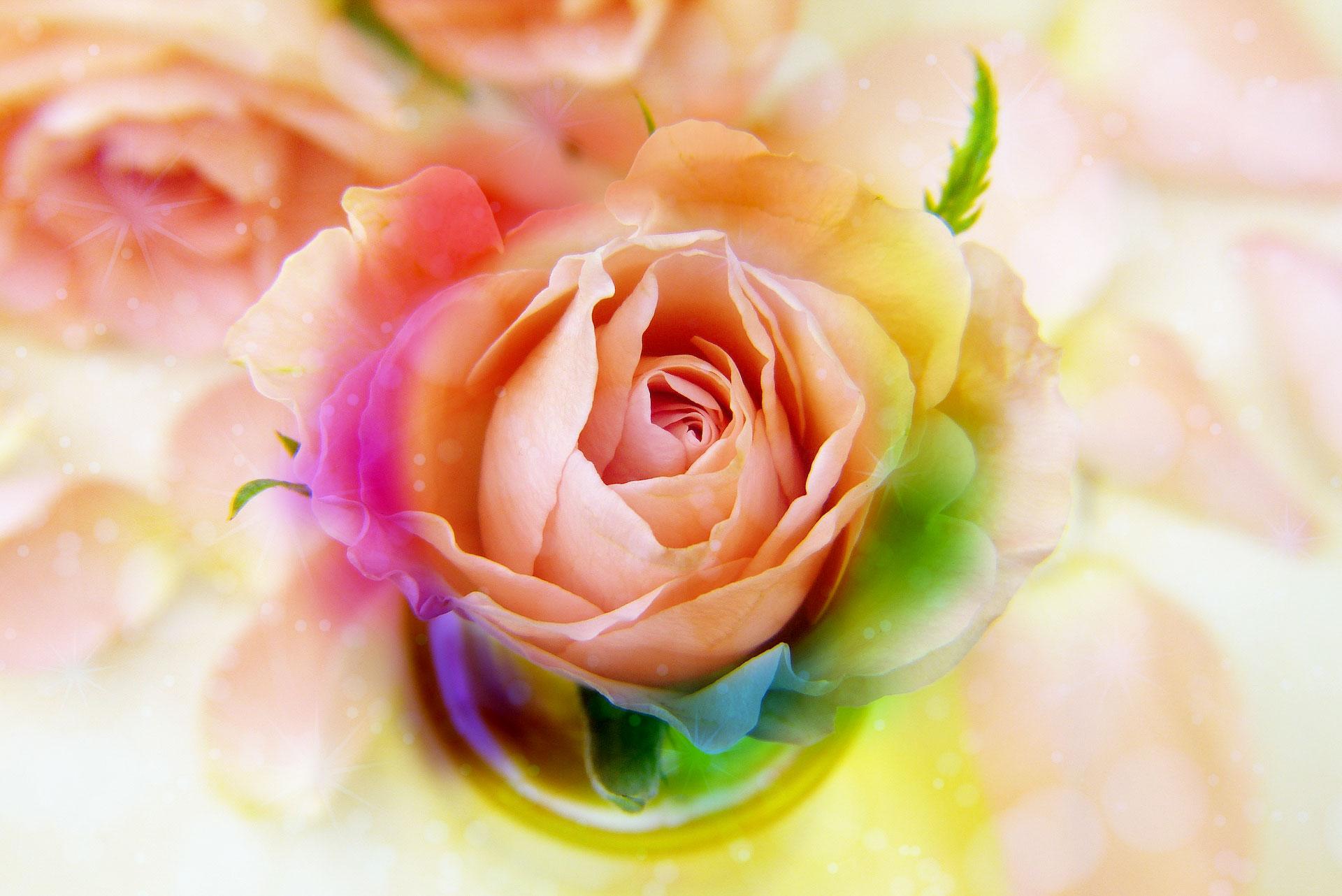 薔薇と虹の待ち受けで恋を叶える