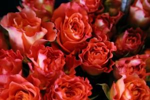 薔薇の待ち受け