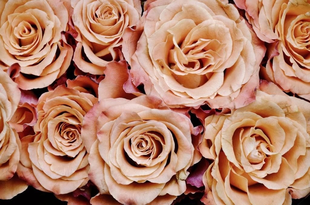 roses-366170_1920