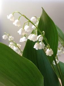 5月1日はメーデーです。メーデーは若さと美のおまじないの日。メーデーズイブの4月30日は魔力が最高に高まる前日の4月30日はワルプルギスの夜!