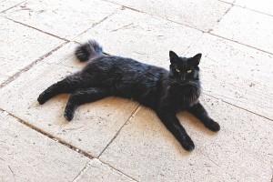 cat-377997_640