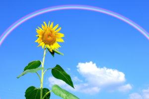 虹とひまわりのプロポーズされる待ち受け