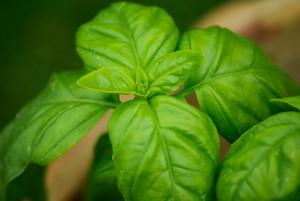 leaves-739286_640