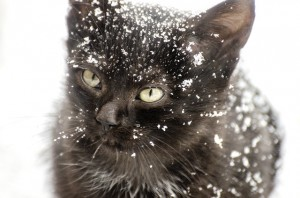 kitten-1102082_640