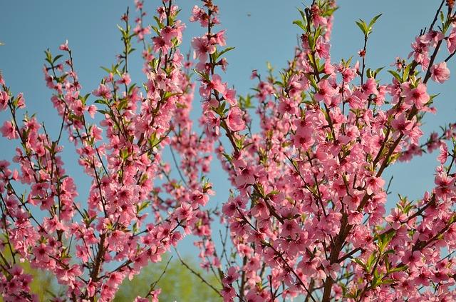 bloom-1039912_640