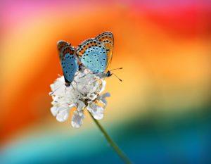蝶を使った願いが叶う魔女のおまじない
