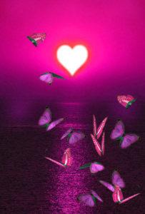 ピンクのユリシスの恋が叶う、すぐに連絡が来る、片思いが叶う、告白される待ち受け画像