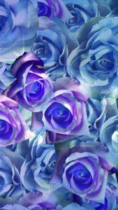 レインボーローズブルーで不可能な恋が叶う待ち受け、背景画像