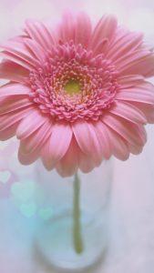 ピンクのハートのガーベラのおまじない復縁画像
