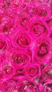 【ピンクの待ち受け】ピンクのバラで連絡が来る、恋の願いが叶う背景画像