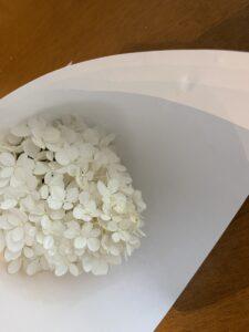 白い紫陽花のおまじないで使う紫陽花