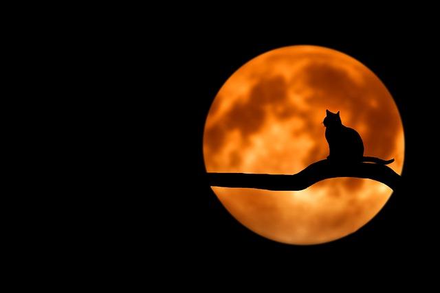 満月の夜の恋のおまじない集(復縁、連絡が来る、片思い成就)
