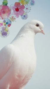 連絡が来る白い鳩の待ち受け、ラインの背景画像