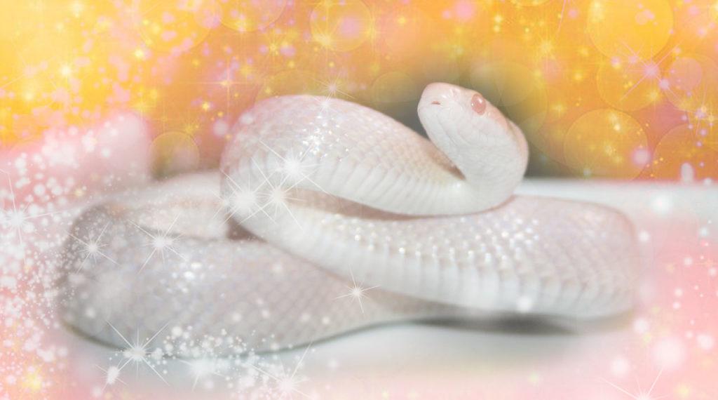 白蛇の最強金運待ち受け