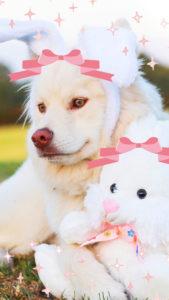 幸運を呼ぶ待ち受け画像・幸せを呼ぶライン背景、うさぎ犬の画像