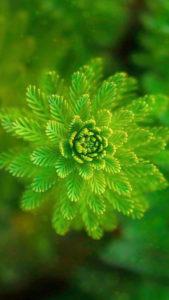 【2020年】幸運を呼ぶ緑のシダ植物の待ち受け