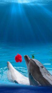 恋が叶う、彼からめっちゃ惚れられるイルカの待ち受け画像