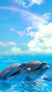 連絡が来る、奇跡の虹とイルカの待ち受け画像、ラインの背景画像
