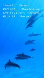 イルカのホ・オポノポノの待ち受け画像『潜在意識をクリーニング!』2