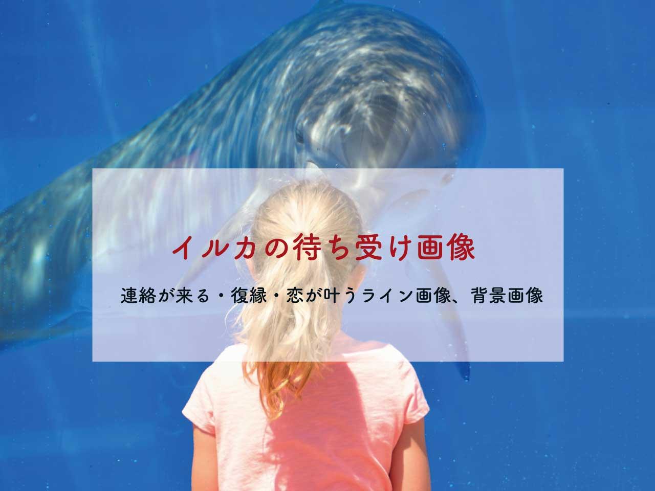 超強力!イルカの待ち受け画像、ラインの背景画像【恋愛、連絡、復縁】