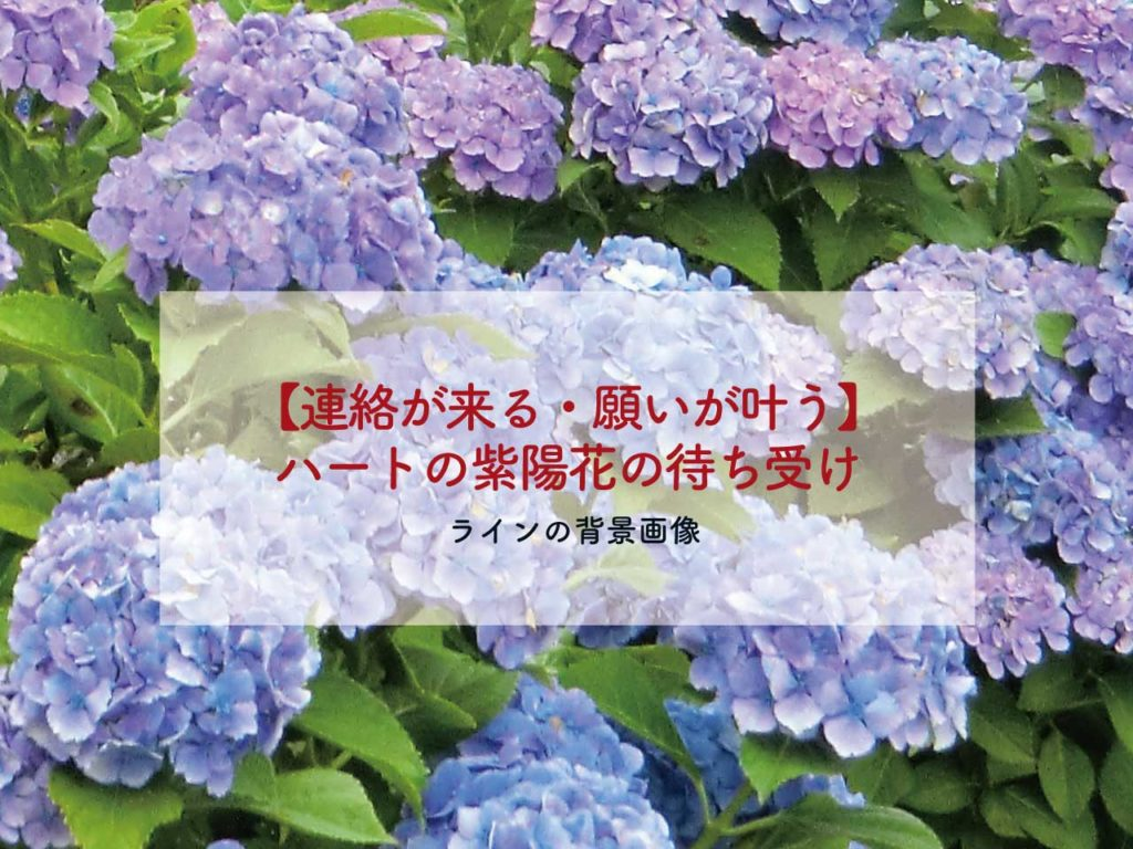 ハートの紫陽花(あじさい)で連絡が来る、絶対恋が叶う待ち受け