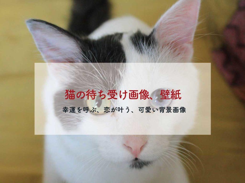 幸運を呼ぶ、恋が叶う猫の待ち受け