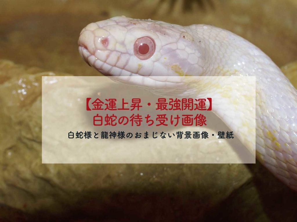 【金運上昇・最強開運】白蛇様のおまじない待ち受け画像、龍神様の背景画像、壁紙