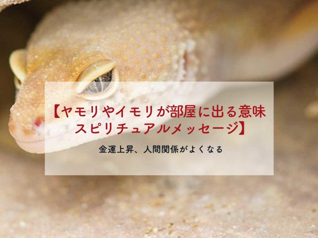 ヤモリやイモリが部屋に出る意味、スピリチュアルメッセージ、風水【金運、運気アップ】