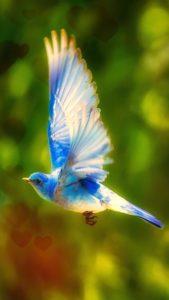 幸せを運ぶ青い鳥の待ち受け