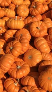 ハロウィンは収穫の日、カボチャのおまじない待ち受け画像