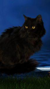 黒猫が恋を運ぶ、ハロウィンの背景画像