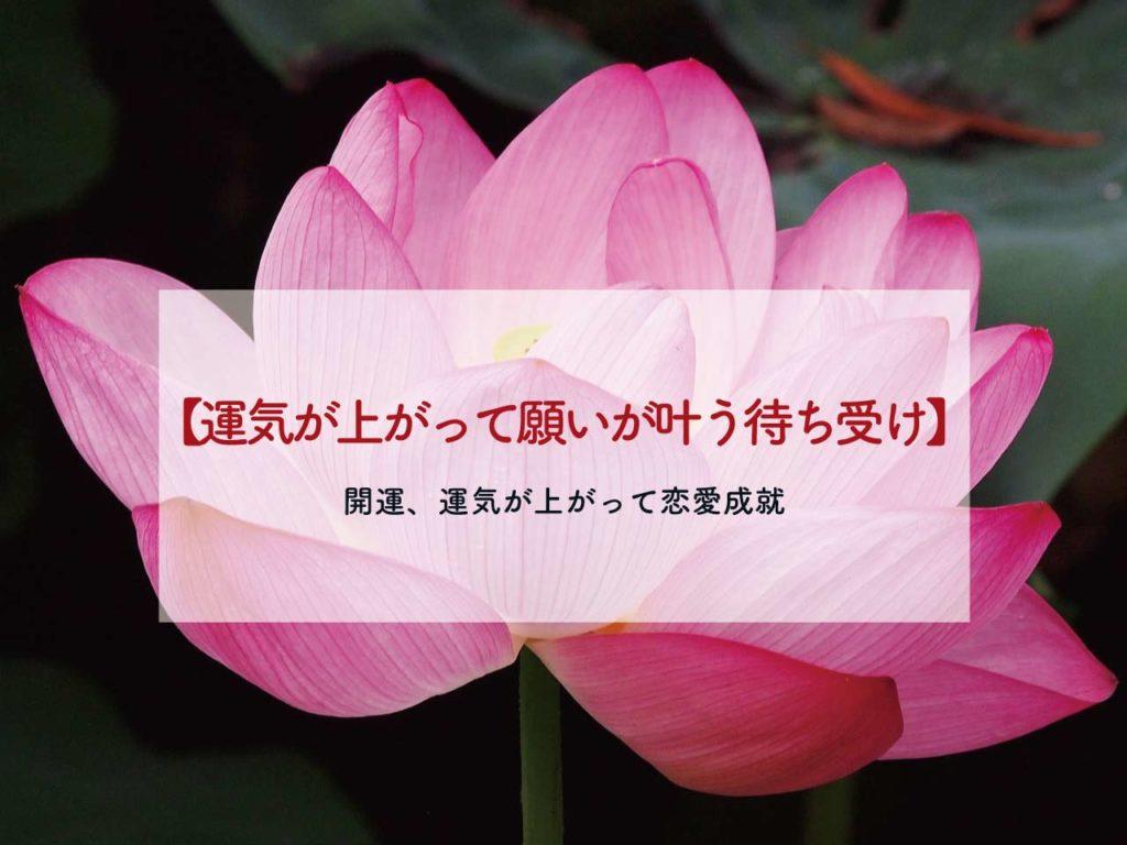 【開運】運気が上がって願いが叶う待ち受け【強運で恋愛成就】