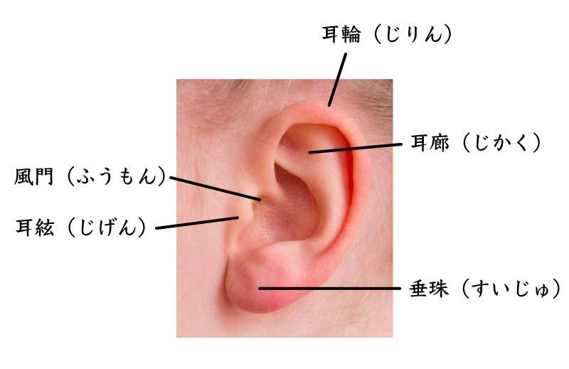 ほくろ占いに必要な耳を構成する各部分について、人相学上の名前と意味を解説