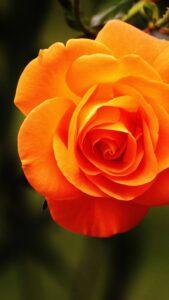 ぷりあでぃす玲奈さんが占う2021年いて座のラッキーカラーはオレンジ